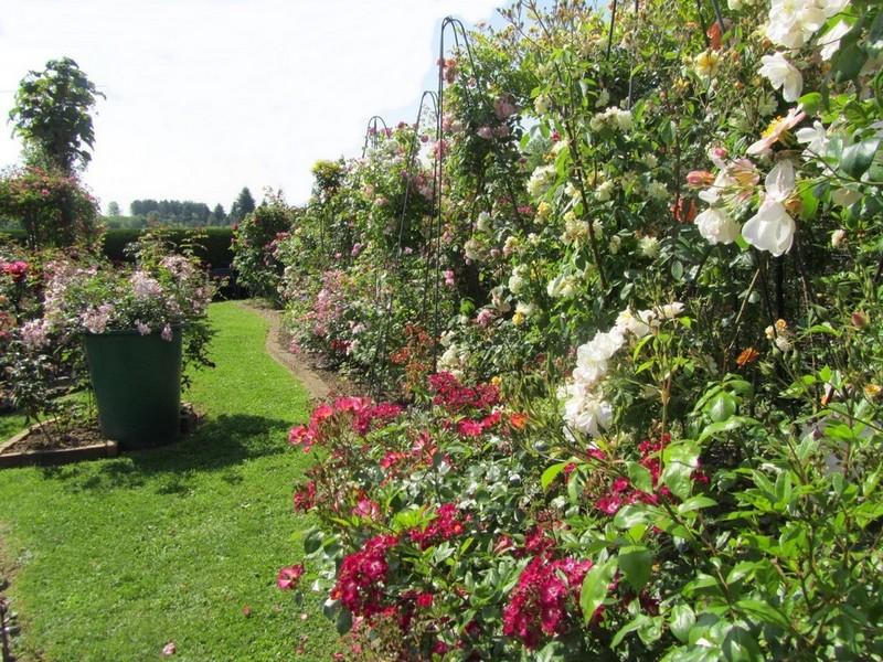 Brigit's Rose Garden