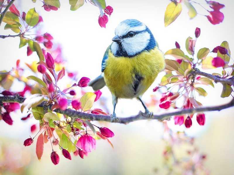 Instant Nature - Oiseaux des villes et des jardins à Vendôme